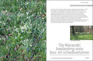 stinzenplanten-eden-56-herfst